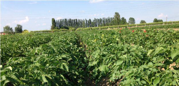 agricola zapparoli